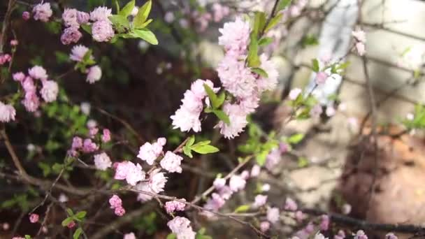 malé růžové květiny pramen