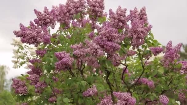 Close-up krásné květy s listy