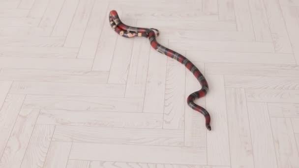 Detail černého a červeného hada leží na bílé dřevěné podlahy.