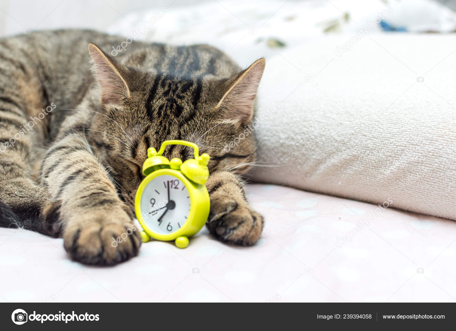 Katze Schläft In Einer Umarmung Mit Einem Wecker Guten