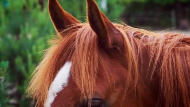 közelkép egy gyönyörű barna ló fejéről
