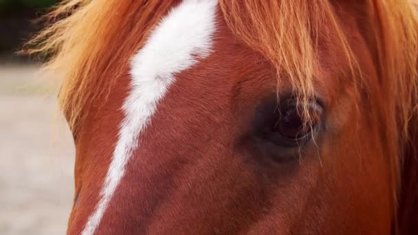 close-up of the head of a beautiful brown horse