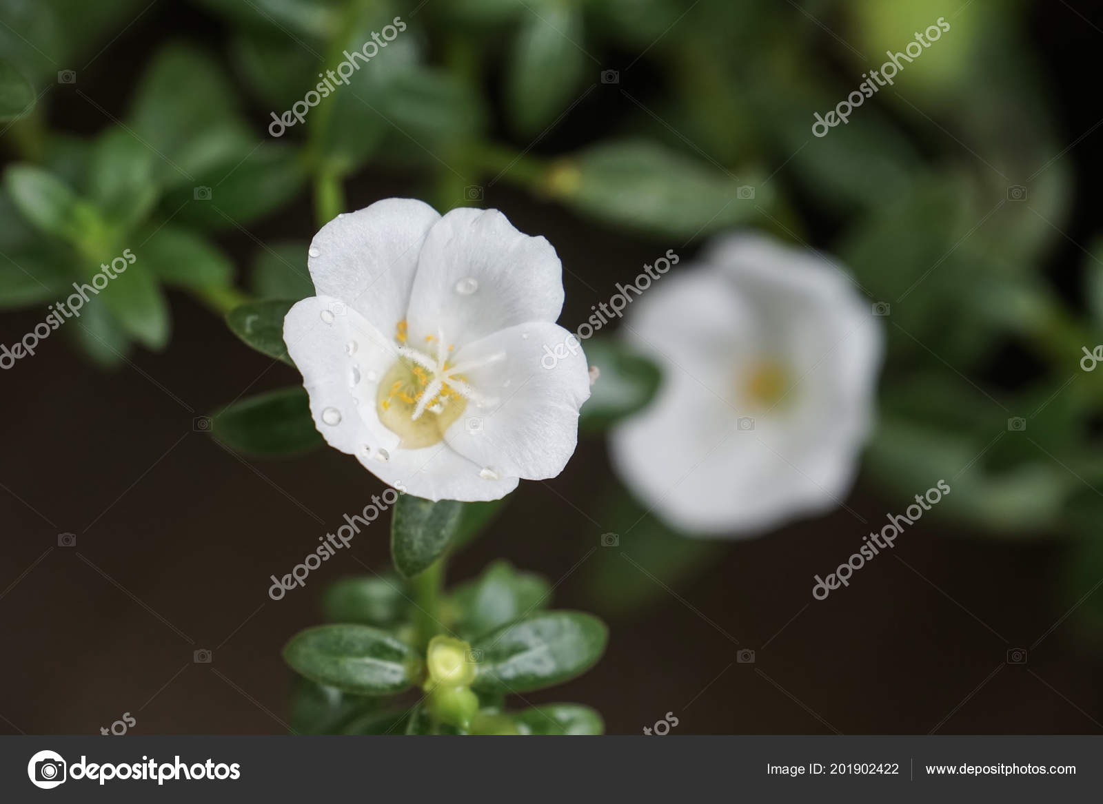 Beautiful Flowers 2019 White Stock Flower Beautiful Flowers