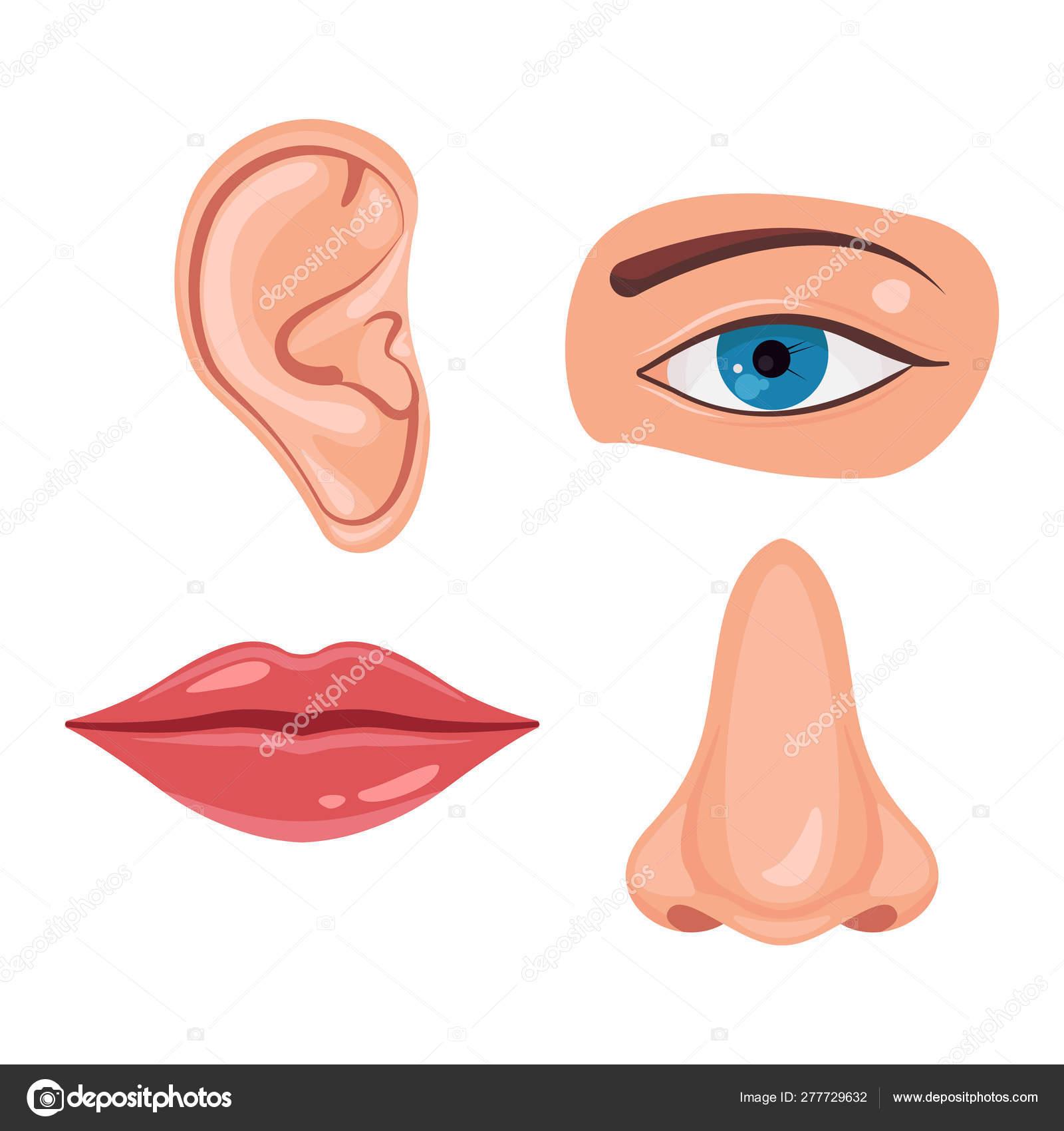 нам должны картинки рот нос глаз уход галерея канады