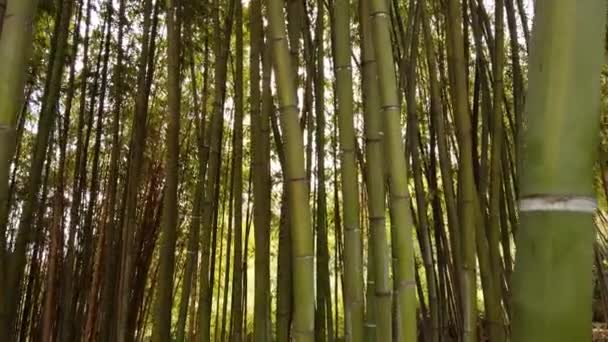 Pov  walking alone between beautiful giant green Japanese bamboo forest