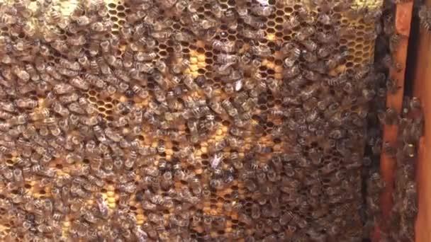 Hintergrund Sechseck Textur, Wachswaben aus Bienenstock mit goldenem Honig gefüllt. Waben bestehend aus Makroübersicht Bienenwachs, gelber süßer Honig aus Bienenstöcken. Honignektar der Bienenwaben.