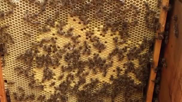 Okřídlený včela létá pomalu do závodu, sbírat nektar pro med na soukromý včelín z květin. Příroda kádr složený na krásné květiny, žlutý pyl včely nohou. Sladký nektar medová včelí med