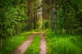 Autó pálya friss zöld erdőben