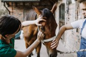 Fotografie Woman veterinary checking horse health in stable