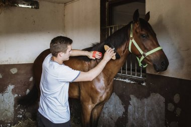 Young man taking good care on horse in stable