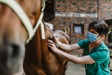 Woman veterinarian gives an injection to horse in stable