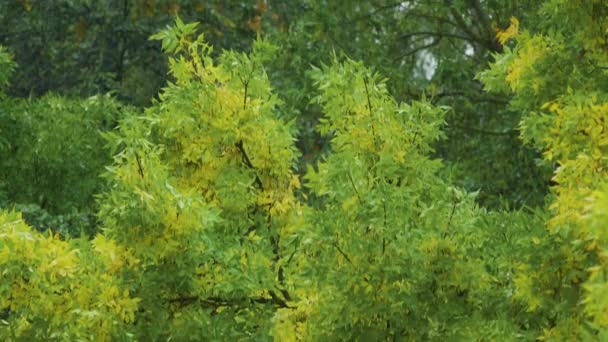 Yellow foliage in early autumn. Rainy day. Bad weather background. Change of seasons