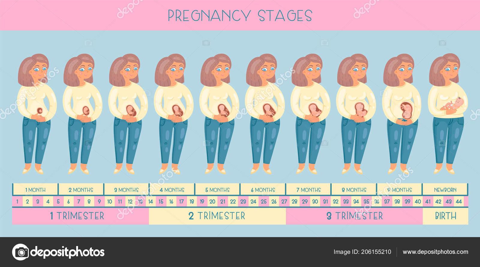 Описание развития беременности с картинками
