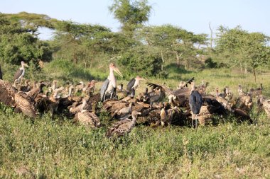 Ndutu Serenegti and Ngorongoro Safari 2019