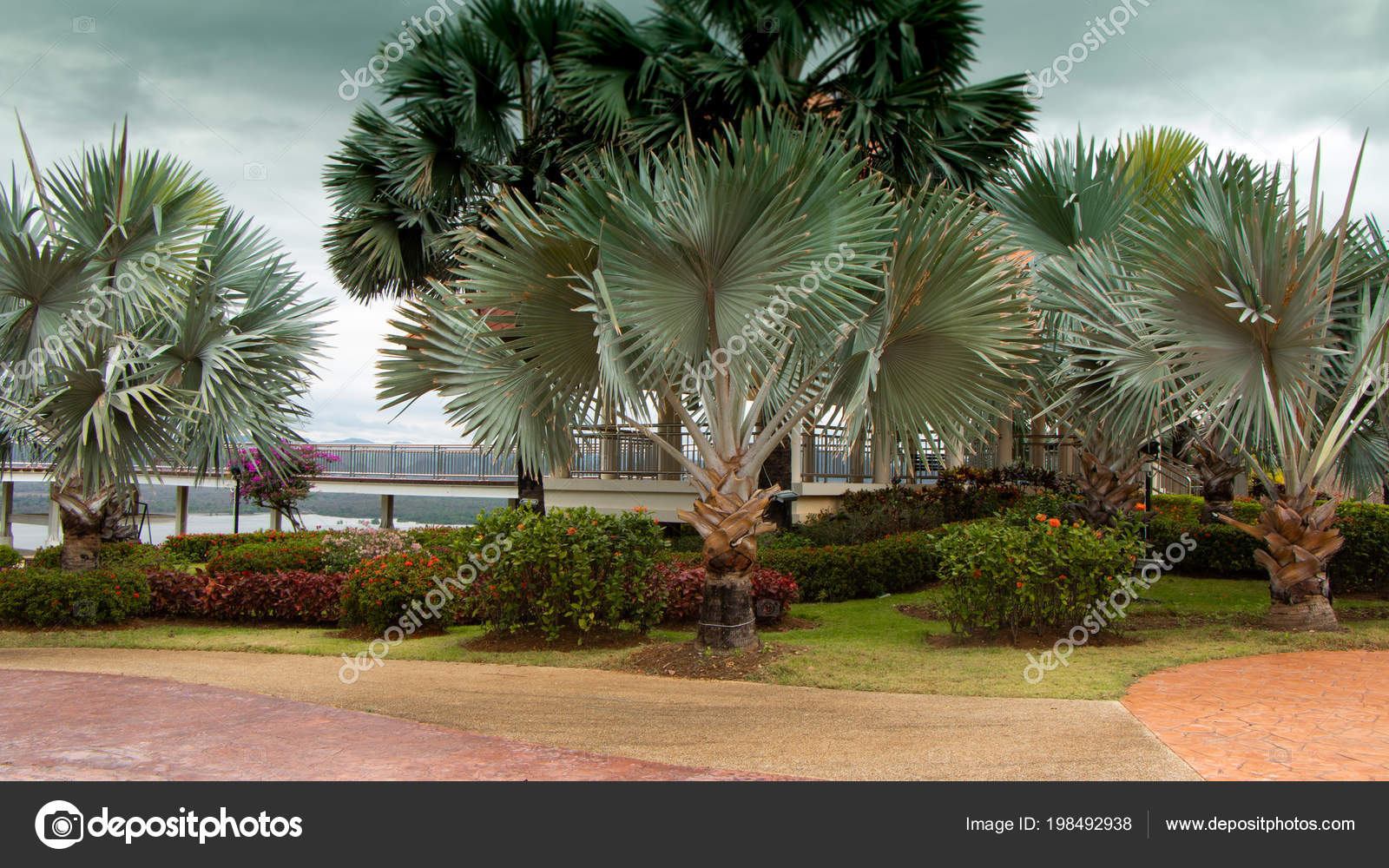 Palm Garden Walkaway — Stock Photo © pattarawit #198492938