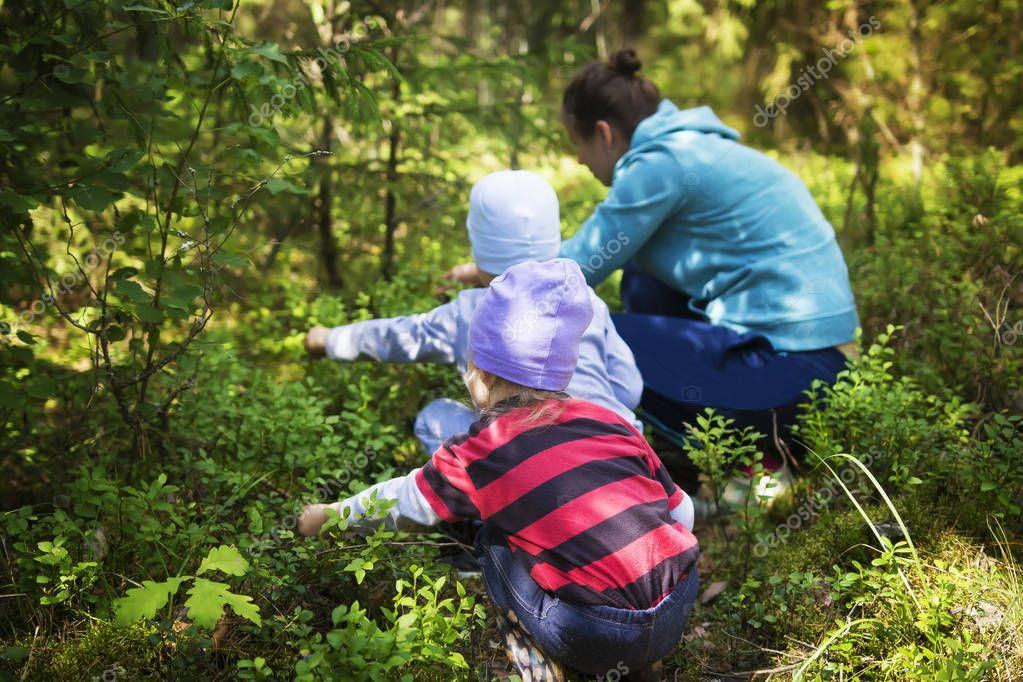 Mom and children take blueberries in a green summer forest on a bright sunny day. The family gathers berries in the forest. Little and daughter and son near mom tear blueberries.