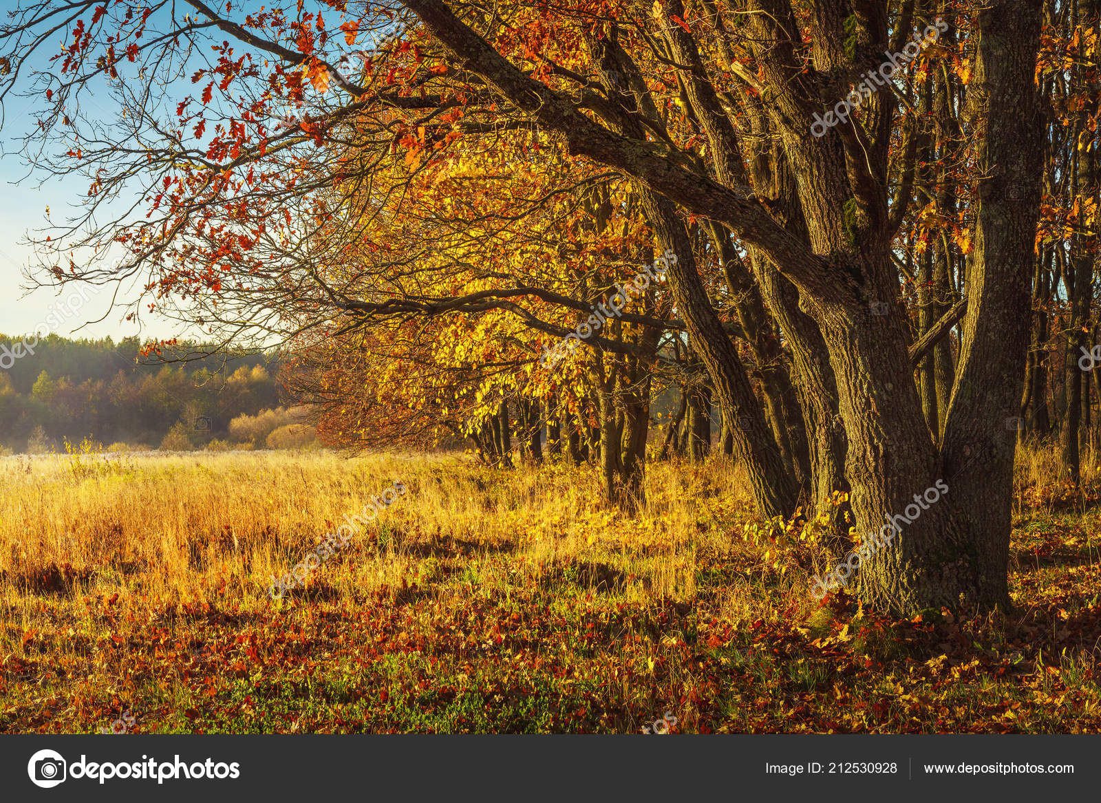 Fall Scenery Backgrounds Scenery Autumn Background Amazing View On Wild Autumn Nature Yellow Trees On Golden Meadow Beautiful Landscape Of Colorful October On Sunny Day Fall Stock Photo C Dzmitrock87 Gmail Com