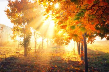 Autumn background. Fall nature. Yellow trees in sunlight. Bright