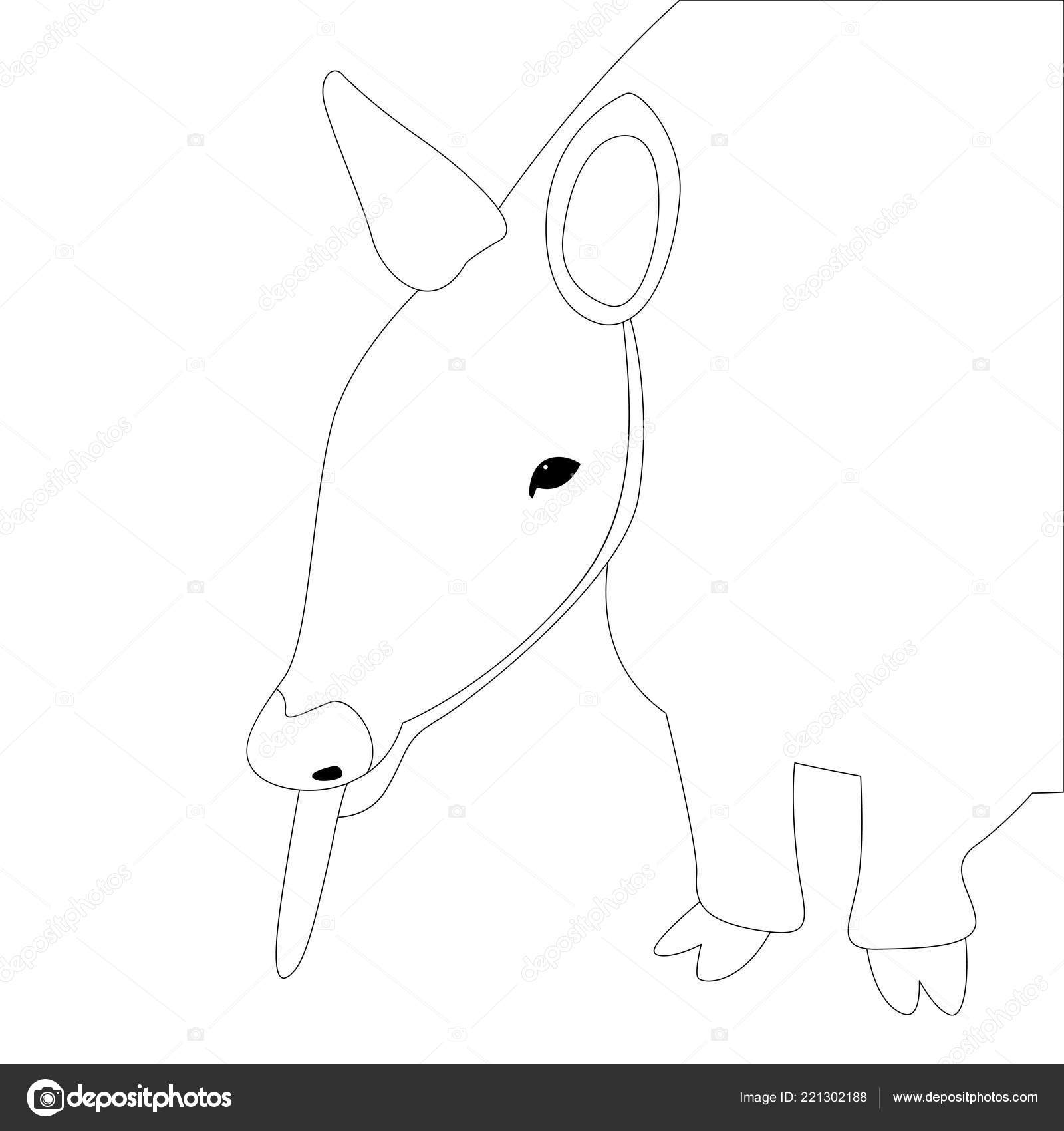 Tatou Rubane Vector Illustration Doublure Tirage Au Sort Image