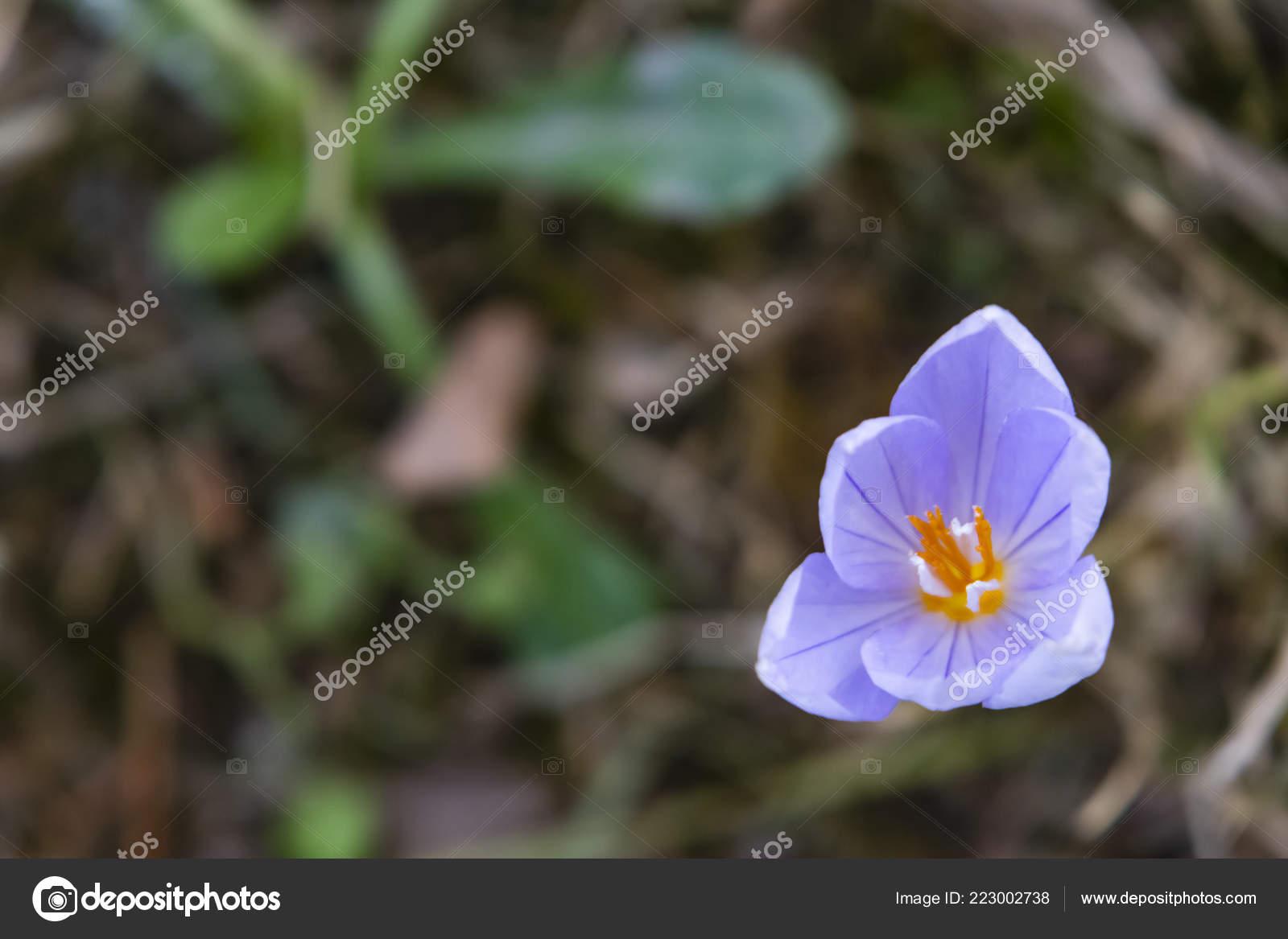 9ac3e1aaa Detail Venkovní Fialový Divoká Květina Přírodě — Stock Fotografie ...