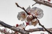 jarní květiny na větve stromů v přírodě