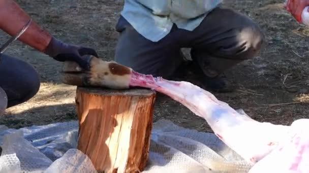 Iszlám és a lakoma, áldozat, áldozat, áldozat, túl sok tehenet húst, muzulmánok vágás az áldozat, smash cut egy tehén,