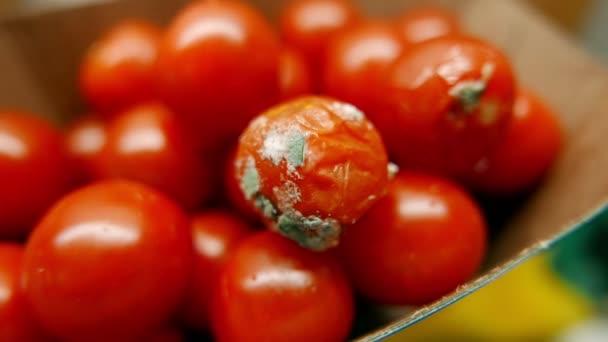 Nahaufnahme von reifen Tomaten mit einem faulen