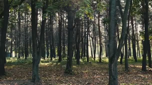 malebné záběry lesa pro přírodní zázemí