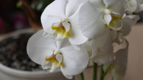 Bouquet with white phalaenopsis orchid flowers