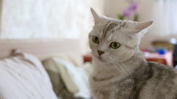niedliche Katze sitzt auf dem Sofa