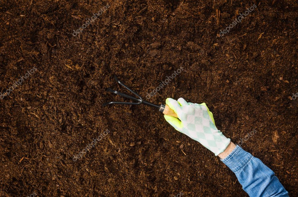 Working in the garden, planting a plant. Soil top view.