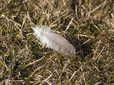White feather on  ground background