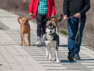 Cute dogs on walk with owners
