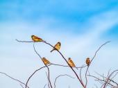 uccelli posati sui rami degli alberi