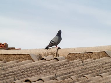 A pigeon on the roof of a building on a cloudy day