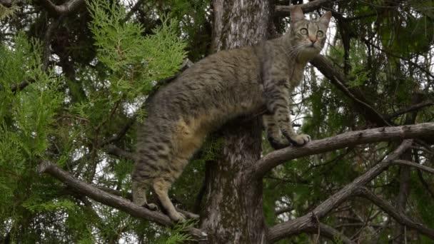 Cirmos macska a fán