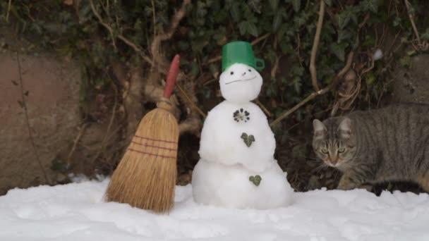mourovatá kočka čichání sněhu u sněhuláka