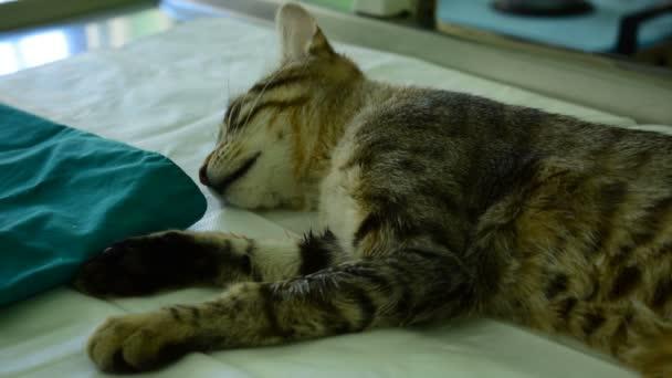 2 von 1 Katze unter Narkose auf dem Tierarzttisch liegend