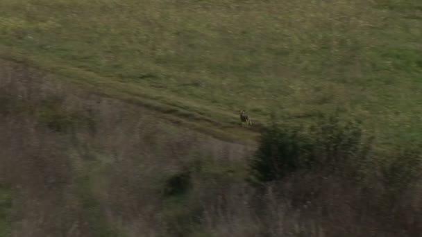 Wildkaninchen zieht sich durch das Feld