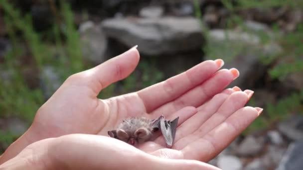 Nahaufnahme - die Frau hält Babyschläger in ihren Händen