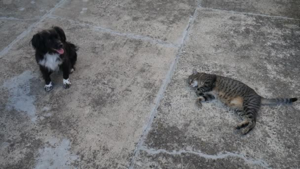Pes a kočka na ulici.