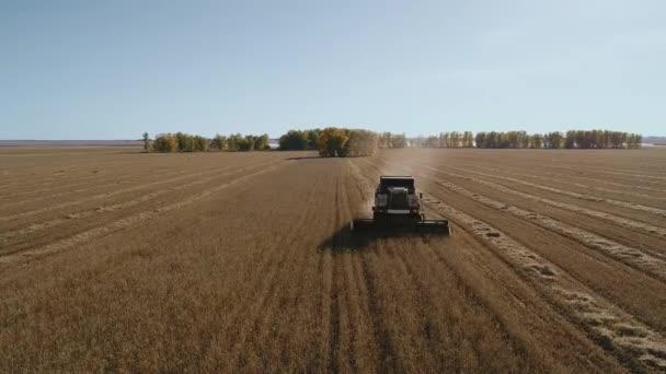 Gazdálkodási gép a betakarítás búza mezőgazdasági ipar a légi drone