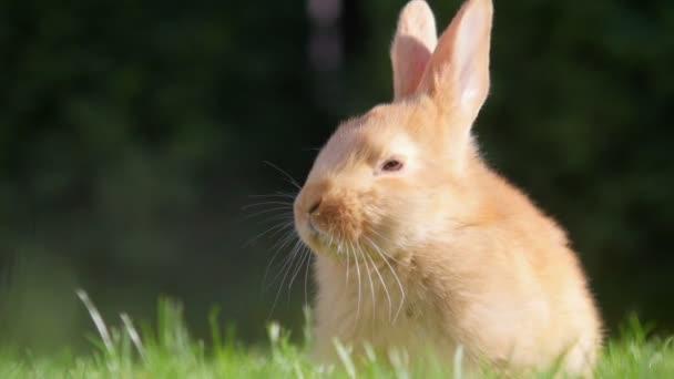beautiful little rabbit sitting on a sunny meadow
