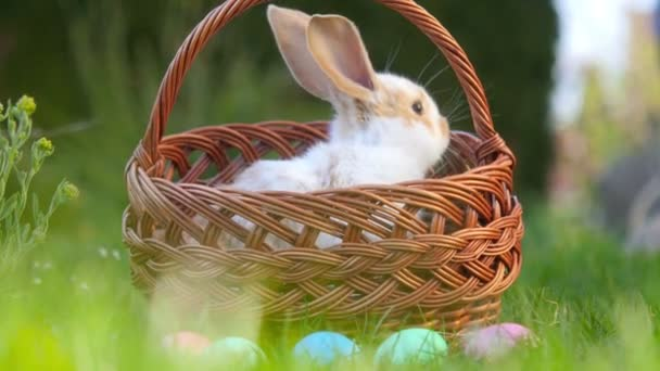 cute little bunny sits in a basket next to painted Easter eggs