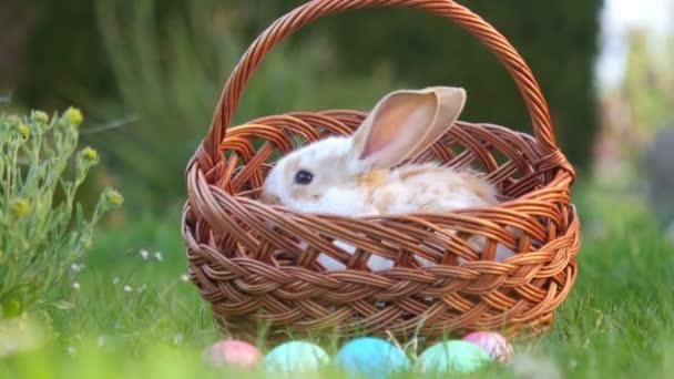 aranyos kis nyuszi ül egy kosár mellett festett húsvéti tojások