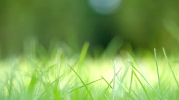 krásné zelené trávě pozadí