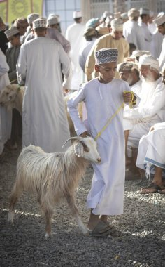 Nizwa, Oman, 21 September 2018: omani men at a market, buying and selling goats at a traditional habta auction