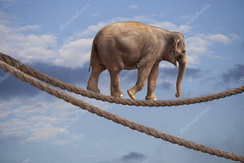 Acrobat Elephant In Sky Walking On Rope