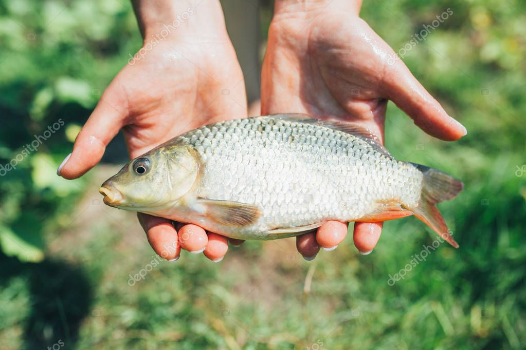 Fisherman holding in hands river fish