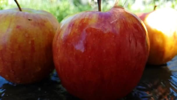 čerstvé jablko mokré na trávě